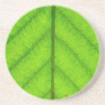 Green Leaf Coaster