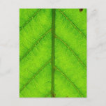 Green Leaf Postcard
