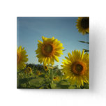 Organic Garden Sunflower Square Button