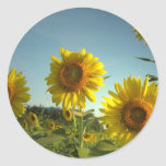 Organic Garden Sunflower Sticker