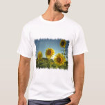 Organic Garden Sunflower T-Shirt